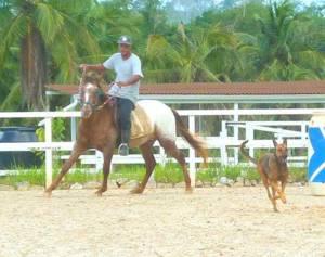 Un beau moment de savie avec les ânes et les chevaux.