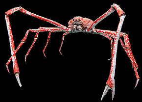 Le crabe japonnais