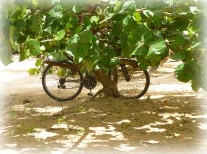 Un vélo, banal, mais beau à La Vela Blanca.
