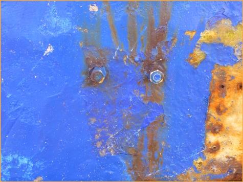 L'animal bleu